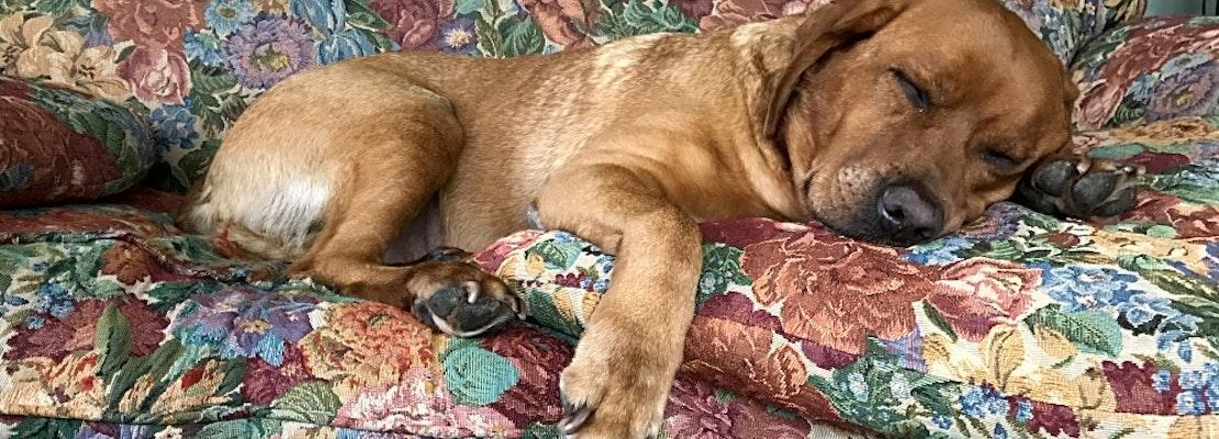 7 delightful doggies to adopt now in Minneapolis