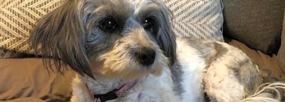 Want to adopt a pet? Here are 7 delightful doggies to adopt now in San Antonio
