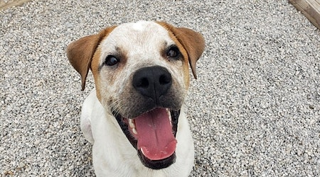 These Fort Worth-based dogs are up for adoption and in need of good homes