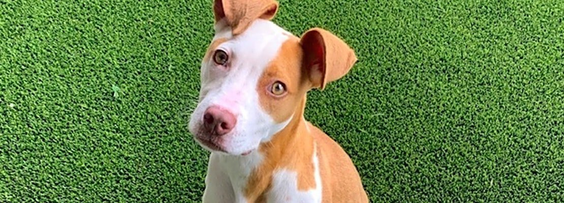 These Nashville-based doggies are up for adoption and in need of a good home