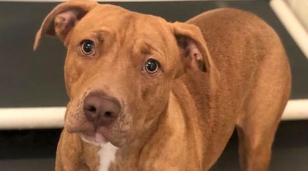 Looking to adopt a pet? Here are 5 lovable pups to adopt now in Atlanta
