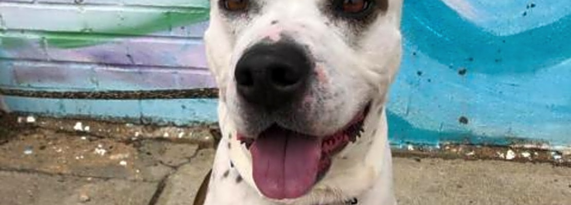Want to adopt a pet? Here are 5 lovable pups to adopt now in Philadelphia