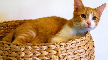 Looking to adopt a pet? Here are 6 lovable kitties to adopt now in Chicago
