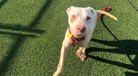 3 cuddly canines to adopt now in Cleveland