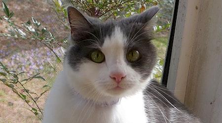 6 cute kitties to adopt now in Durham