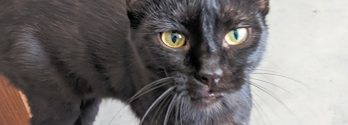 Want to adopt a pet? Here are 5 cute kitties to adopt now in Minneapolis