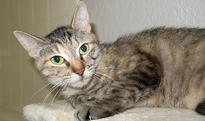 7 charming cats to adopt now in Austin