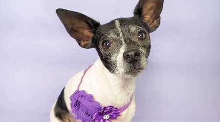 Looking to adopt a pet? Here are 6 delightful doggies to adopt now in Phoenix