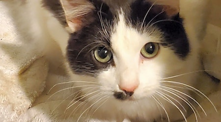 These Long Beach-based felines are up for adoption and in need of a good home