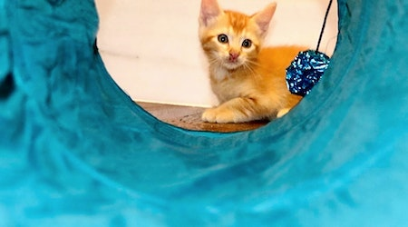 Anaheim-based kittens up for adoption