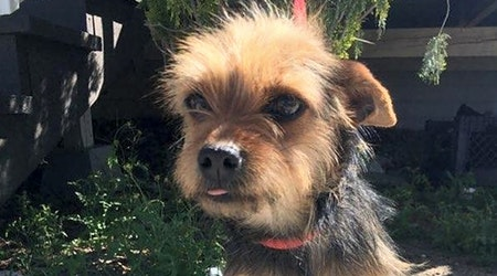 3 cuddly canines to adopt now in Santa Ana