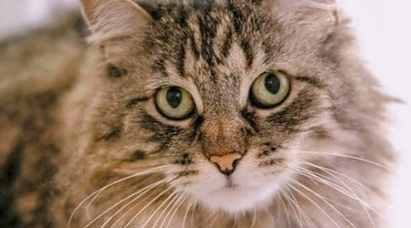 These San Jose-based felines are up for adoption and in need of a good home