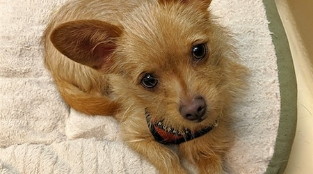 6 delightful doggies to adopt now in Portland
