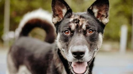 6 cuddly canines to adopt now in Seattle