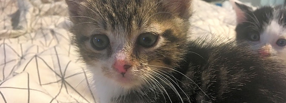 7 cute-as-can-be kittens to adopt now in Jersey City