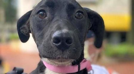 5 delightful doggies to adopt now in Washington