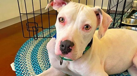 5 delightful doggies to adopt now in Orlando