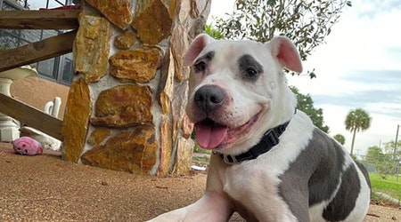 4 lovable pups to adopt now in Tampa