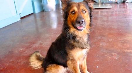 6 delightful doggies to adopt now in San Antonio