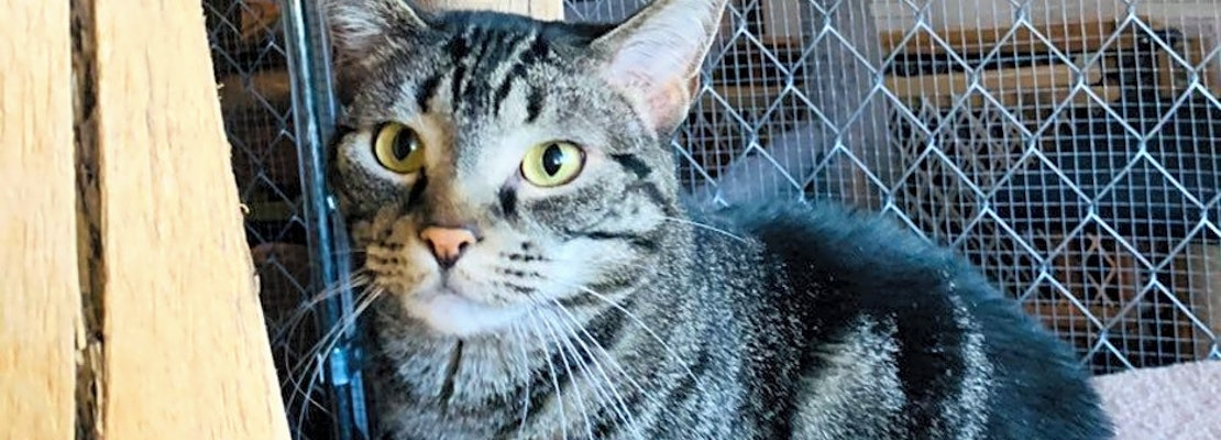 These Aurora-based cats are up for adoption and in need of a good home