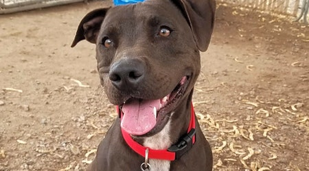 Want to adopt a pet? Here are 5 cuddly canines to adopt now in Mesa