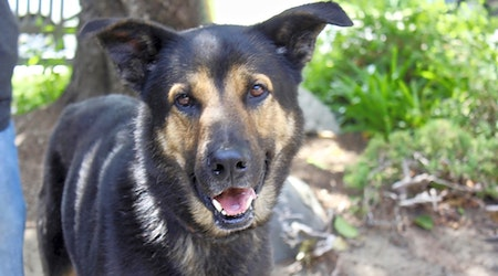 Looking to adopt a pet? Here are 5 delightful doggies to adopt now in Los Angeles