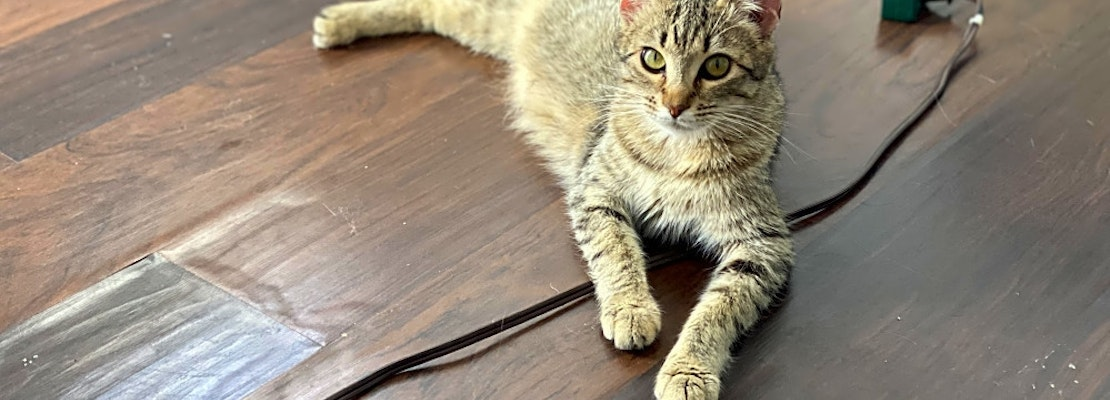 3 cool kitties to adopt now in Long Beach
