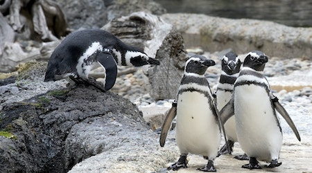 San Francisco Zoo gets go-ahead to reopen next week