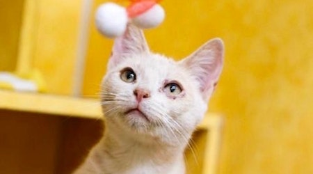 These cheeky Austin-based cats are up for adoption and in need of good homes