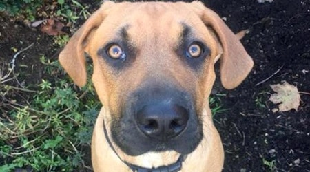 7 delightful doggies to adopt now in Seattle