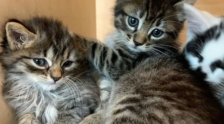 Hayes Valley business briefs: KitTea returns with kitten room; Dish Clothing, Ernest Alexander close