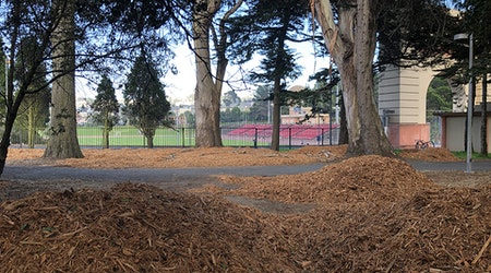 What's up with Kezar Stadium's piles of mulch?