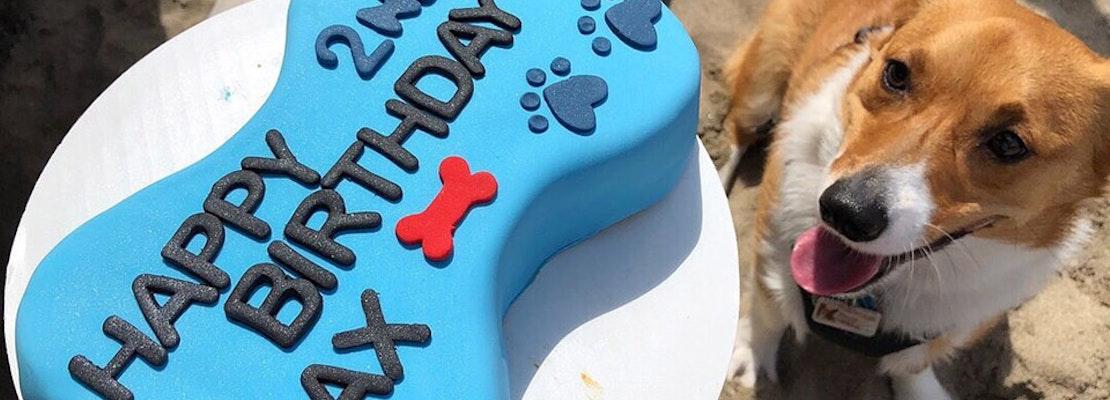 Dog-friendly bakery relocates to Potrero Hill